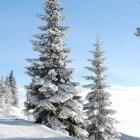De ecologische kerstboom: de natuur in huis