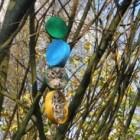 Vogels voeren: bird feeders knutselen met kinderen