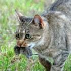 Een muis in huis: hoe kun je een muis uit huis verwijderen?