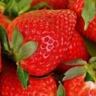 Ik wil aardbeien!