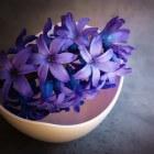Hyacinten allergie, waaraan is een allergie te herkennen