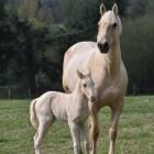 Paarden houden aan huis
