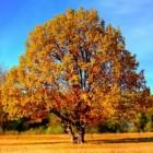 Herfst: wat we kunnen leren van de natuur