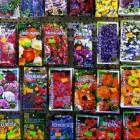 Honderden soorten bloemzaden voor fleurige tuin en balkon
