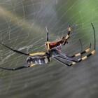 Welke insecten in huis zijn nuttig en welke schadelijk?