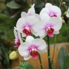 Orchideeën voor binnen en buiten