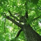 Een boom omzagen