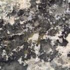 Hoe kun je bruine tot zwarte schimmel verwijderen?