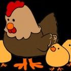 Kippenren: bouwen van een kippenhok