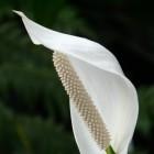 Luchtzuiverende planten voor schone lucht en gezondheid