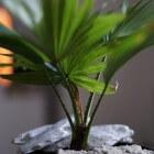 De beste kamerplanten kopen: welke sierplant aanschaffen?