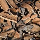 Kurkvloeren zijn terug van weggeweest