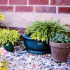 Hoe werkt het verpotten van planten?