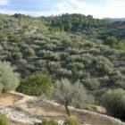 Een olijvenplantage beginnen