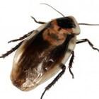 Pest Reject tegen ongedierte, werkt het?