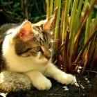 Middelen om katten uit de tuin te houden