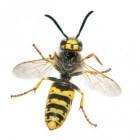 Horren: geen last meer van muggen, wespen en andere insecten