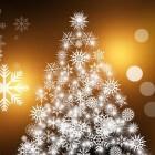 Kerstbomen: welke kiezen en hoe onderhouden?