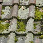 Groene aanslag van tegels of straat verwijderen