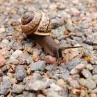 Tien tips om slakken te slim af te zijn