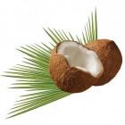 De kokowall - een geluidwerende schutting