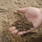 Het nut van zelf compost maken