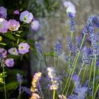 Geur van bloemen en planten in de tuin voor extra genot