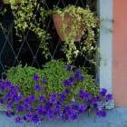 Tuinieren op de vierkante centimeter