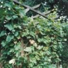 Mijn tuin: Leve de pergola!