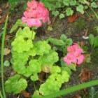 Stekken van planten zonder stekpoeder en met veel water