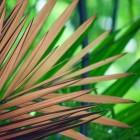 Jungletuin ook goed mogelijk in ons klimaat