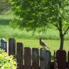 Ontwerp uw eigen tuin in een paar stappen