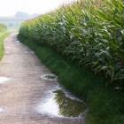 Wateroverlast en tuinieren op natte of vochtige grond