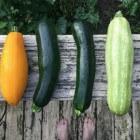 Gemakkelijke groenten om snel te kunnen oogsten