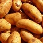 Tuinieren; tips en trucs voor het telen van aardappels