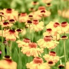 Stimuleren van de bloei: Hoe krijg je meer bloemen?