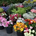 Biologische of duurzame snijbloemen en potplanten