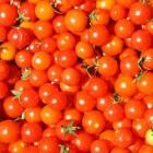 Je eigen moestuin: Cherrytomaat