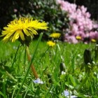 Tuinarchitectuur: ontwerpen van de tuin