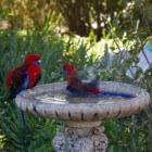 Verschillende manieren om vogels naar uw tuin te lokken