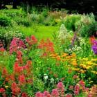 Hoe zorg ik voor een bloemrijke tuin?
