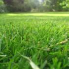 Hoe zaai ik gras of hoe leg ik een grasmat aan?