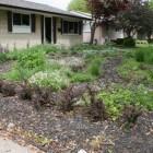 Goedkoop een tuin aanleggen