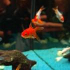 Vissen in je vijver