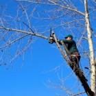 Boomverzorging door een Tree Worker of boomverzorger