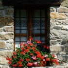 Buitenplanten zonder tuin of balkon