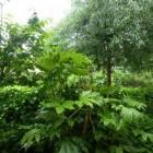 Schaduwplanten voor droge grond onder bomen en struiken