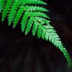 Contrast in de schaduwtuin door plantenkeus en bladvorm
