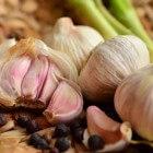 Knoflook zaaien of planten: moeilijk is het in geen geval