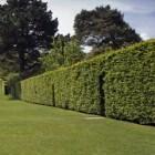 Bomen Op Erfgrens.Erfafscheiding Regelingen Voor Bomen Heggen En Hagen Huis En
